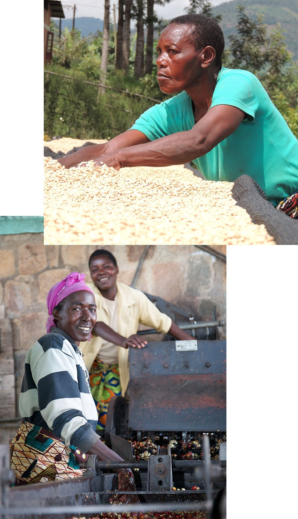 Collage of a woman sorting coffee beans and two women smiling at the camera while operating machinery