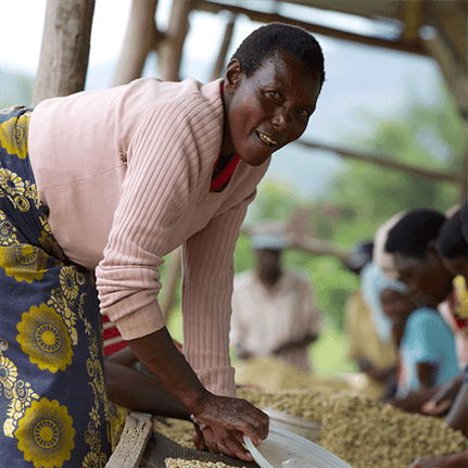 Woman in foreground looking at camera while bending over, seated women in background picking through and focusing on coffee beans