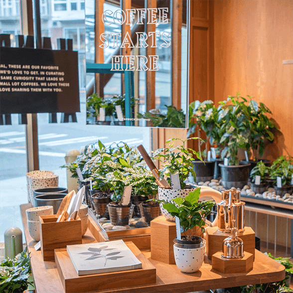 Display of potted plants, ceramic pots, and copper watering cans in front of a storefront window