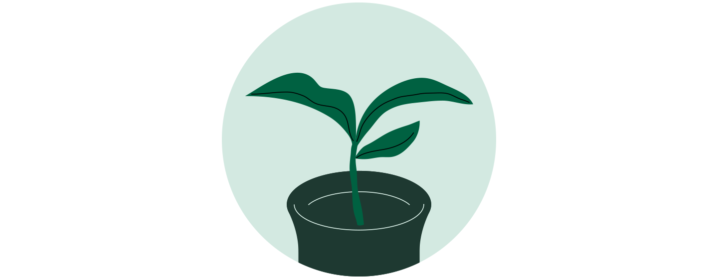 Illustration of a small plant in a container with three leaves sprouting upward