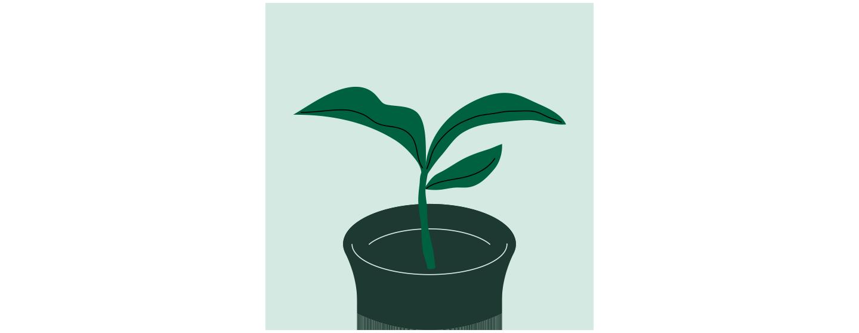 Illustration d'une petite plante dans un contenant avec trois feuilles qui pointent vers le haut