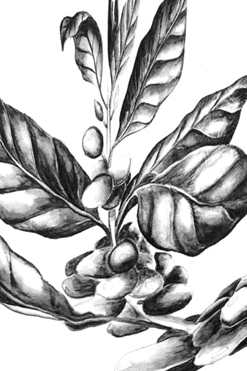 Illustration of plant leaves and fruit