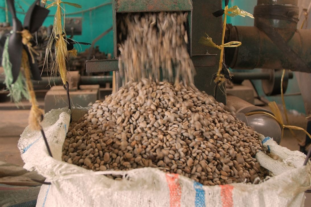 Action shot of coffee beans coming out of machinery and into a woven sack